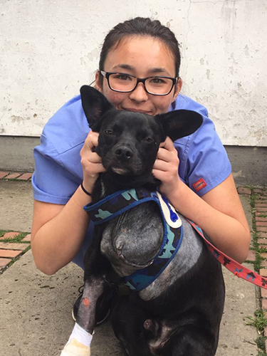 Christine Nishimoto with a canine patient at UNAL's School of Veterinary Medicine